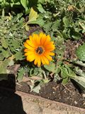 Совершенный цветок стоковое фото rf