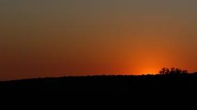 Совершенство - Addo в красивом апельсине Стоковая Фотография RF