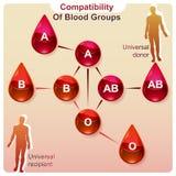 Совместимость групп крови Стоковые Изображения