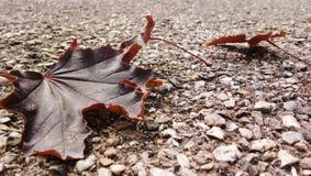 совмещать созданное различное изображение 3 hdr листва падения выдержек стоковая фотография
