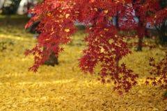 совмещать созданное различное изображение 3 hdr листва падения выдержек Стоковое Изображение