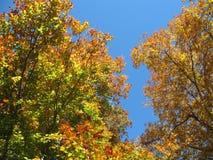 совмещать созданное различное изображение 3 hdr листва падения выдержек Стоковые Фото