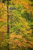 совмещать созданное различное изображение 3 hdr листва падения выдержек стоковые изображения