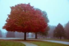 совмещать созданное различное изображение 3 hdr листва падения выдержек Стоковые Фотографии RF