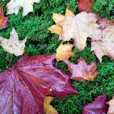 совмещать созданное различное изображение 3 hdr листва падения выдержек Стоковые Изображения RF