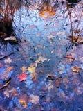 совмещать созданное различное изображение 3 hdr листва падения выдержек Стоковое Фото