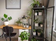 Современная промышленная черно-белая комната исследования с многочисленными зелеными комнатными растениями как заводы и кактусы б стоковая фотография rf