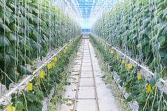 Современная Vegetable плантация Стоковая Фотография
