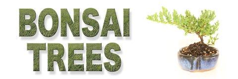 Современное знамя слов деревьев бонзаев Стоковое Фото