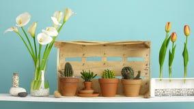 Современное украшение комнаты с клетью Полка против стены бирюзы с декоративными кактусом, стеклом и утесами Рука кладя вниз с ca сток-видео