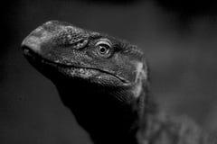 Современное T-rex Стоковое Изображение RF