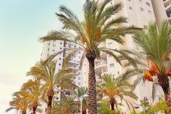 Современные многоквартирные дома готовые для поселения с финиковыми пальмами современный ландшафт урбанский Конструкция c жилищно стоковая фотография