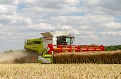 Современные урожаи вырезывания жатки зернокомбайна claas Стоковое фото RF