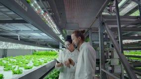 Современные ученые принимансяы за развитию здорового производства продуктов питания путем расти они в вертикальных автоматизирова сток-видео