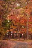 Современный день Narnia, Nikko Япония стоковые изображения