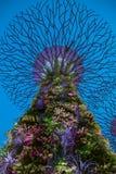 Современный дизайн дерева Supergrove воплощения Стоковое Изображение
