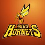 Современный профессиональный логотип для команды спорта Талисман шершня Шершни, символ вектора на светлой предпосылке Стоковые Изображения