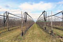 Современный сад вишни в предыдущей весне Стоковая Фотография RF