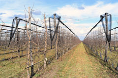 Современный сад вишни в предыдущей весне Стоковое Изображение