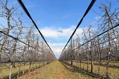 Современный сад вишни в предыдущей весне Стоковые Изображения