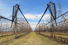 Современный сад вишни в предыдущей весне Стоковые Изображения RF