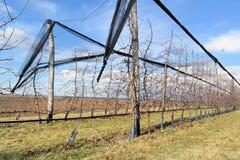 Современный сад вишни в предыдущей весне Стоковое Фото
