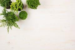Современный состав заводов хвои зеленого цвета ассортимента в взгляд сверху баков на белой предпосылке деревянной доски Стоковые Изображения