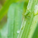 Совсем зеленый цвет Стоковое фото RF