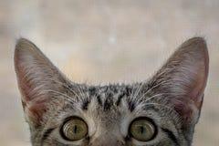 Совсем о глазах Стоковые Фото