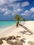 Согнутые пальмы в пляже с белым песком Стоковое Изображение RF