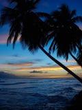 Согнутые пальмы с красивым заходом солнца Стоковая Фотография RF