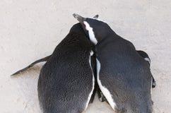 Соединение Peguin Стоковое Фото
