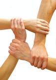 соединенные руки Стоковые Изображения RF