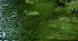 Соединенные Штаты, Аляска, городок Ketchingen, столица кальмара, небольшой поток, трава воды акции видеоматериалы