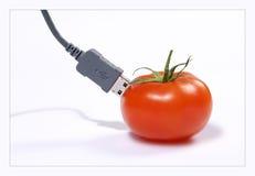 соединенный томат Стоковые Фото