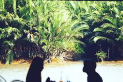 Соедините иметь пикник на лесе мангровы стоковое фото
