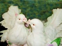 соедините фарфор dove стоковые фотографии rf