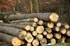 соединяет древесину Стоковые Фото