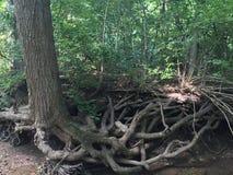 Соединение дерева стоковые фотографии rf