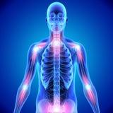 Соединения косточки скелета Стоковое Изображение RF