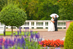 соедините венчание Стоковое Изображение