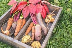 Сожмите органические овощи сжатые в ферме в коробке на зеленой траве Стоковое Изображение RF