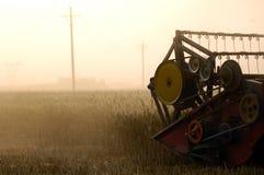 сожмите пшеницу Стоковая Фотография
