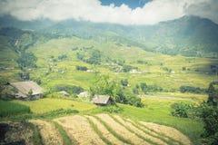 Сожмите сезон в северном Вьетнаме на небе полей террасы голубом Стоковая Фотография RF