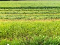 сожмите сено Стоковые Фото