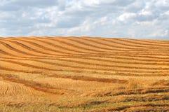 Сожмите swathing в поле прерии Стоковые Фотографии RF