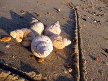 созданные раковины песка цветка стоковое фото