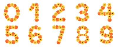 созданный комплект номера цветков маргаритки Стоковые Фотографии RF