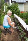 Созрейте женщина работая в ее саде стоковое фото rf