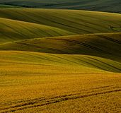 Созрейте зерно на южной Моравии Стоковая Фотография RF